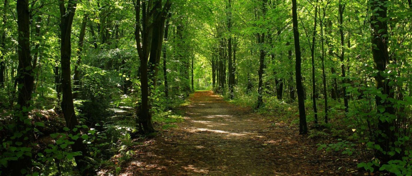 hodeča meditacije
