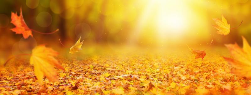 jesen, ayurveda, meditacije, nasveti jeseni