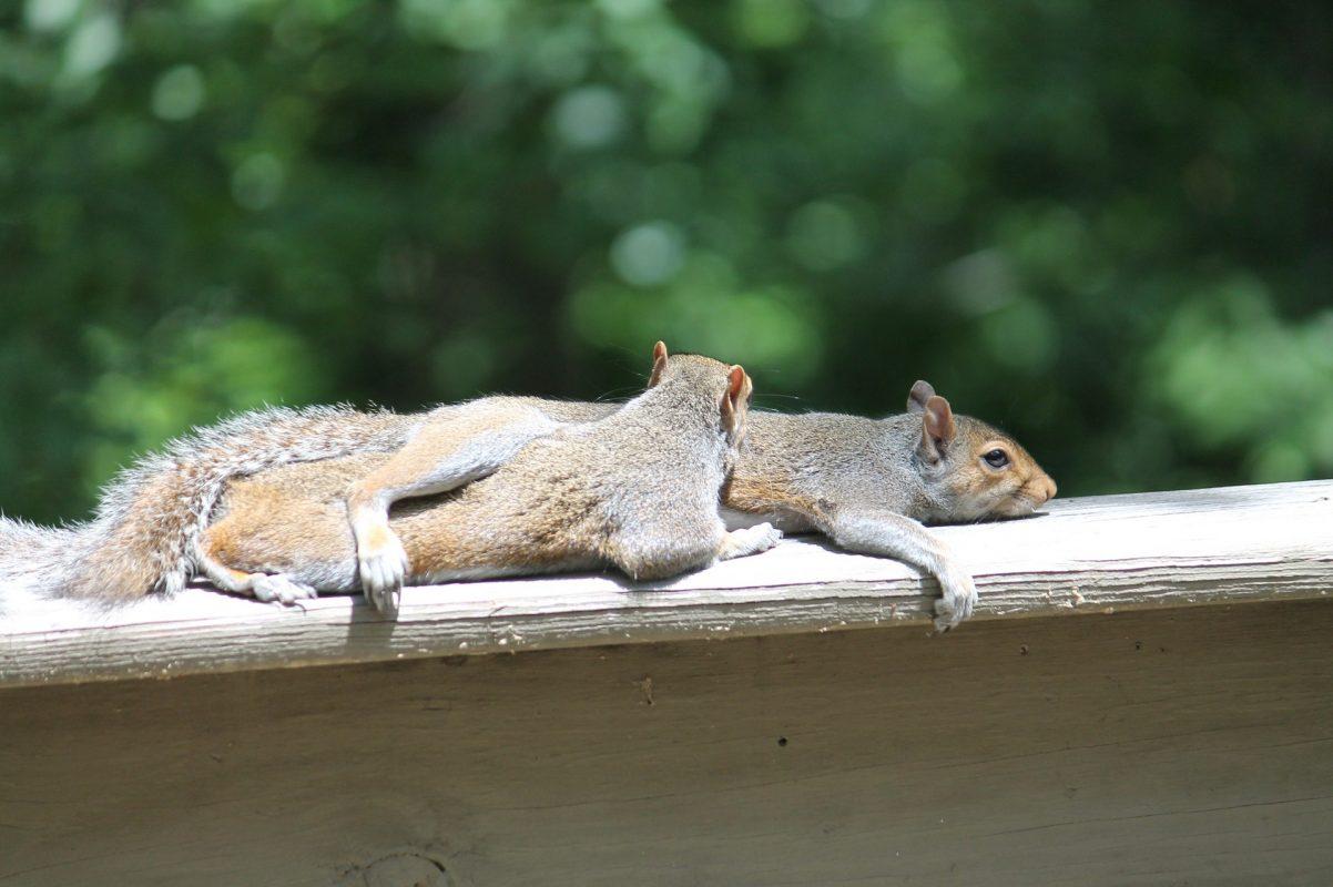 spomladanska utrujenost, veveričke, meditacija